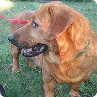 Adopt A Pet :: hannah - Shelter Island, NY