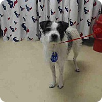 Adopt A Pet :: Benny - West Warwick, RI
