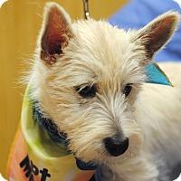 Adopt A Pet :: Mike-pending adoption - Omaha, NE