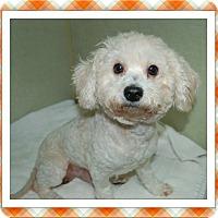 Adopt A Pet :: Adopted!! Kismet - S TX - Tulsa, OK