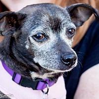 Adopt A Pet :: Bernice - Tucson, AZ