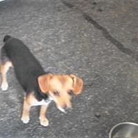 Adopt A Pet :: Jill #2 - Graceville, FL