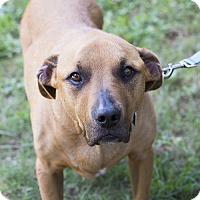 Adopt A Pet :: Ellen - Houston, TX