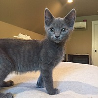 Adopt A Pet :: Pixie - Asheville, NC