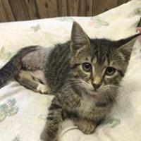 Adopt A Pet :: JT - Athabasca, AB