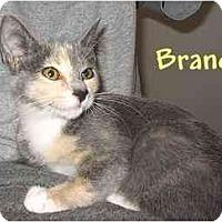 Adopt A Pet :: BRANDI - AUSTIN, TX