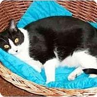 Adopt A Pet :: Sheila - Secaucus, NJ
