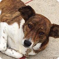 Adopt A Pet :: Jazzy - Kingwood, TX