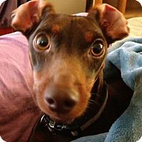 Adopt A Pet :: RICKY - Hurricane, UT