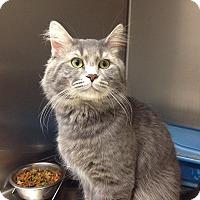 Adopt A Pet :: T-4 George - Triadelphia, WV