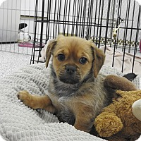 Adopt A Pet :: Sierra - Washington, PA