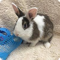 Adopt A Pet :: Gizmo - Paramount, CA