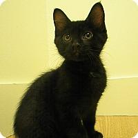 Adopt A Pet :: Bagheera - Milwaukee, WI