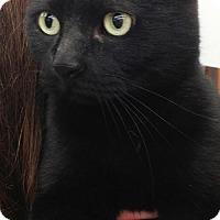 Adopt A Pet :: Missy - Spokane, WA