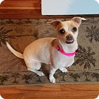 Adopt A Pet :: Angel C - Irmo, SC