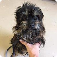 Adopt A Pet :: Harvey Milk - Jersey City, NJ