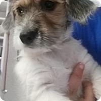 Adopt A Pet :: Daisy - Bloomington, IL