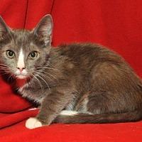 Adopt A Pet :: Moby - Garland, TX