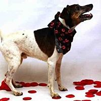 Adopt A Pet :: PARKER - Sanford, FL