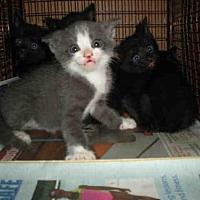 Adopt A Pet :: A753543 - Austin, TX