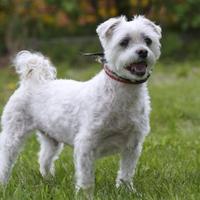 Adopt A Pet :: Zam - Ile-Perrot, QC