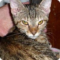 Adopt A Pet :: Polyanna - Dallas, TX