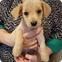 Adopt A Pet :: soto - conroe, TX