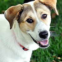 Adopt A Pet :: Emie - Fort Leavenworth, KS