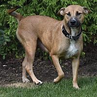 Adopt A Pet :: Sandra Dee - Mechanicsburg, PA