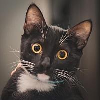 Adopt A Pet :: Yatzee - Murfreesboro, NC