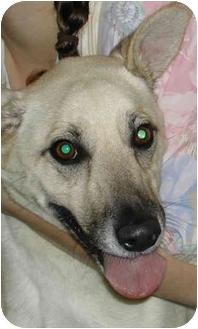 Blue Heeler/German Shepherd Dog Mix Dog for adoption in Fort Bragg, California - Taz
