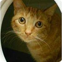 Adopt A Pet :: Ginger - Maywood, NJ