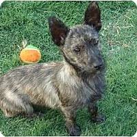 Adopt A Pet :: Cooper - Arlington, TX