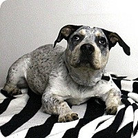 Adopt A Pet :: Wyatt - Seattle, WA