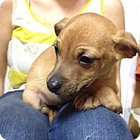 Adopt A Pet :: Cameron - Marlton, NJ