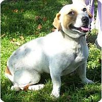 Adopt A Pet :: Queenie - P, ME