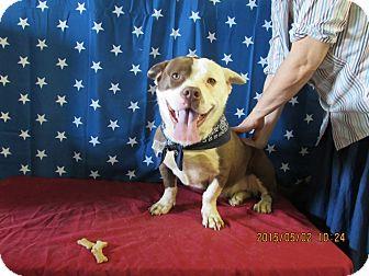 Basset Hound/American Bulldog Mix Dog for adoption in Walthill, Nebraska - Maribelle