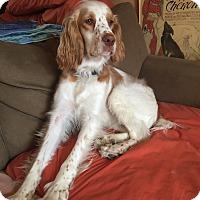 Adopt A Pet :: Nana - Rigaud, QC