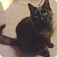 Adopt A Pet :: Sweetie-Hope for the New Year - Oberlin, OH