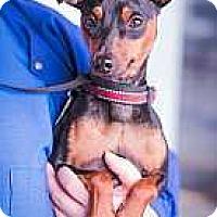 Adopt A Pet :: Jack - Syracuse, NY