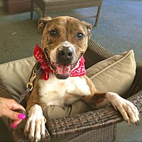 Adopt A Pet :: Handsome Reilly-VIDEO - Burbank, CA