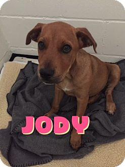 Golden Retriever/Labrador Retriever Mix Puppy for adoption in Barnwell, South Carolina - Jody