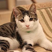 Adopt A Pet :: Roger - Carlisle, PA