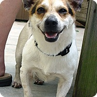 Adopt A Pet :: Rusty Start~adopted! - Glastonbury, CT