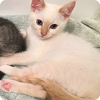 Adopt A Pet :: Ms Chili - Orange, CA