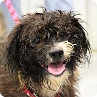 Adopt A Pet :: Bandit - Martinsville, IN