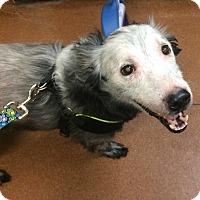 Adopt A Pet :: Snoop - Oak Ridge, NJ