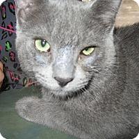 Adopt A Pet :: Barry - Fallon, NV