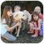 Photo 4 - Labrador Retriever Mix Dog for adoption in Cumming, Georgia - Thurman