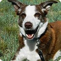 Adopt A Pet :: Red - Cheyenne, WY